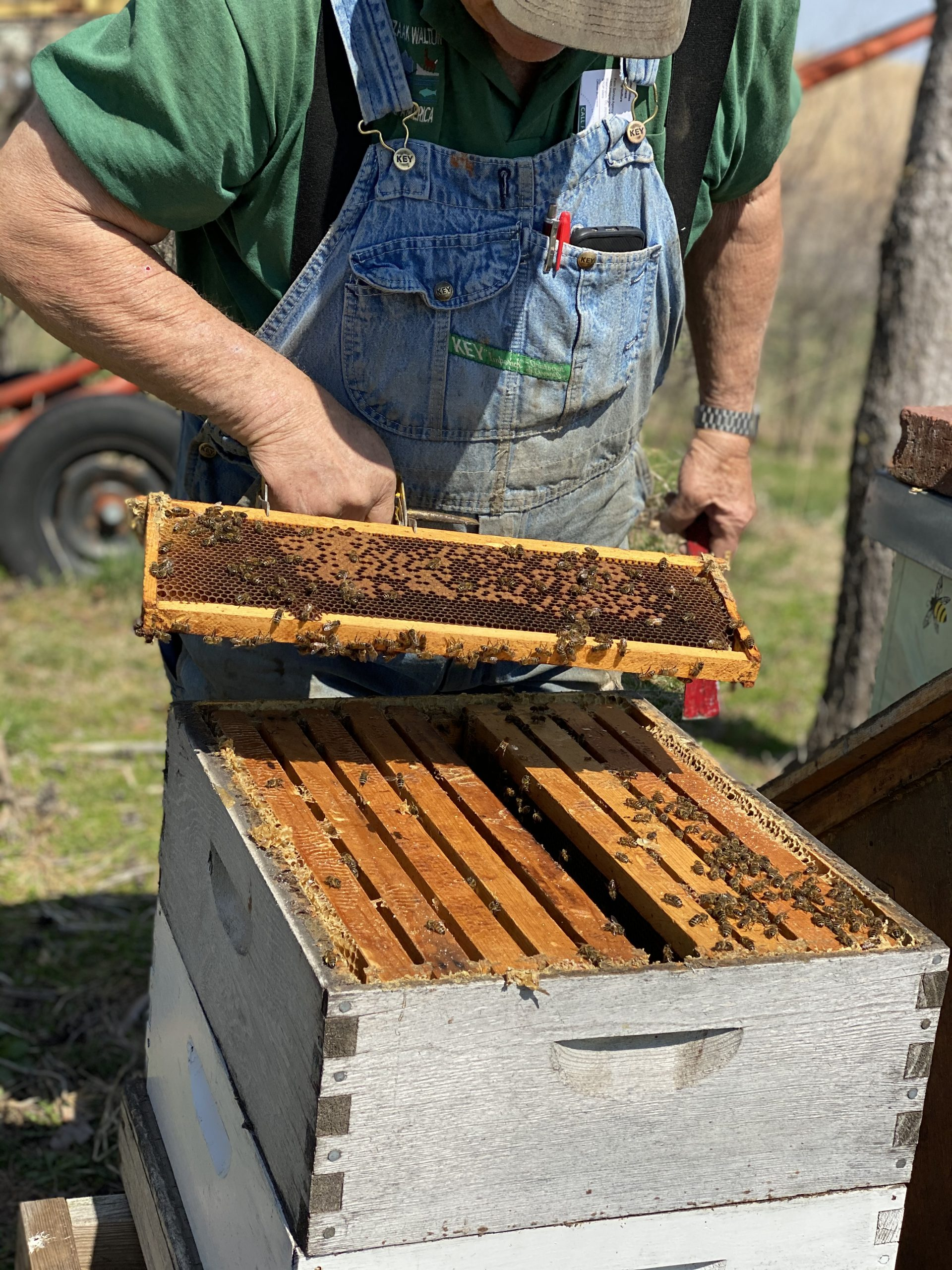 Striegel Acres Bees