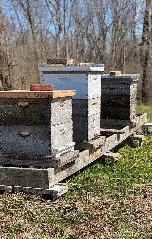 Beehives at Streigel Acres